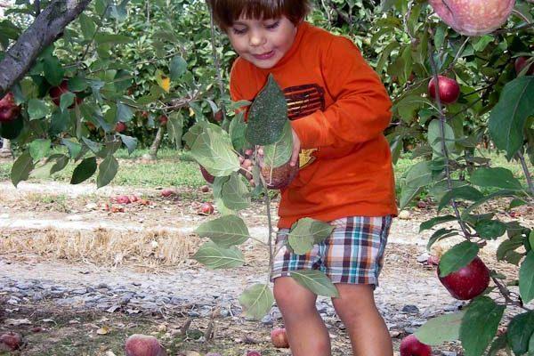 Hillcrest Orchards